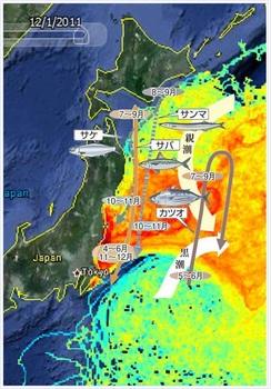 サンマ 福島 放射能.JPG