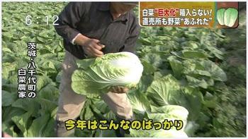 茨城 白菜 巨大 放射能.JPG